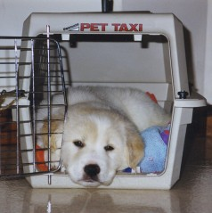 Our puppy in his crate