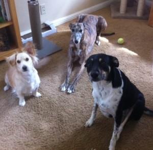 Skip, Nellie & Callie