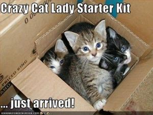 crazy cat lady kit