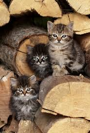 kittens in wood pile