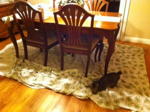 Savannah plays on the sheets on the dining room rug