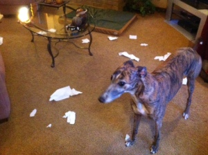 Some discovered the toilet paper