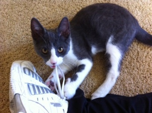 Tommy loves shoelaces