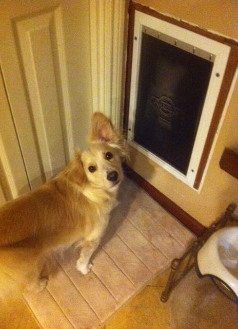 Dog door incompetent Skip