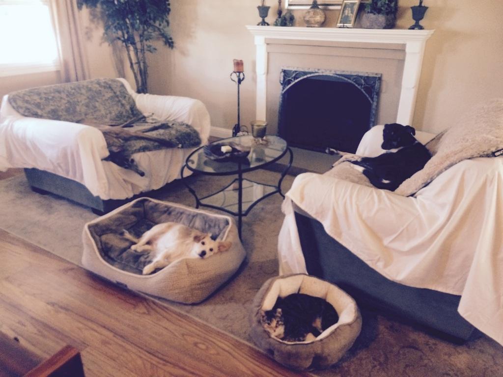 Nelli, Callie, Skip and Tippi at nap time