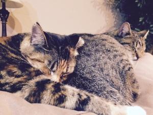 Tippi and Savannah