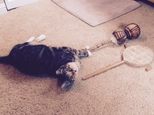Caught red handed after knocking over my African drum and shaker thingy