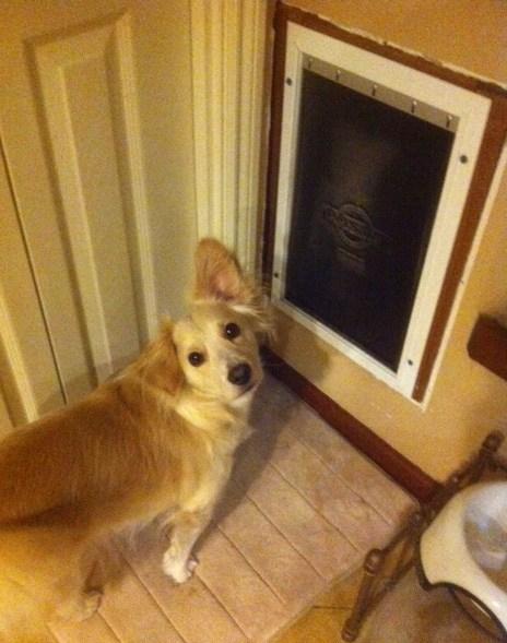 skip at dog door