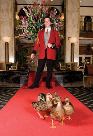 Peabody Hotel marching ducks