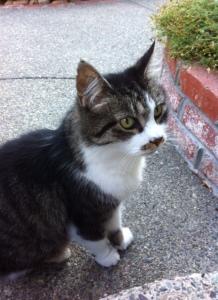 buddy on sidewalk