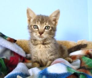 kern kitten 3