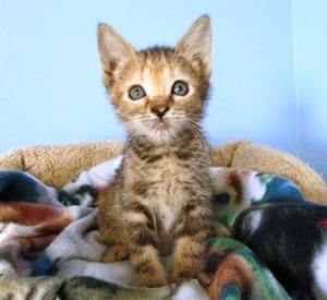 kern kitten 4