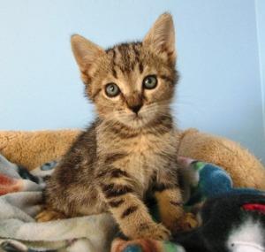 kern kitten 5