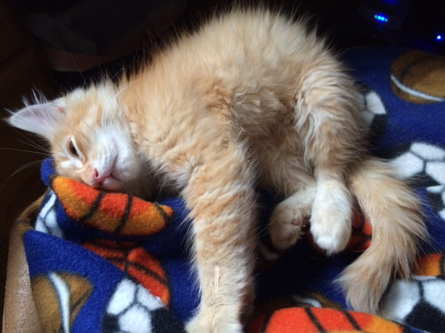 Gilbert lap napping