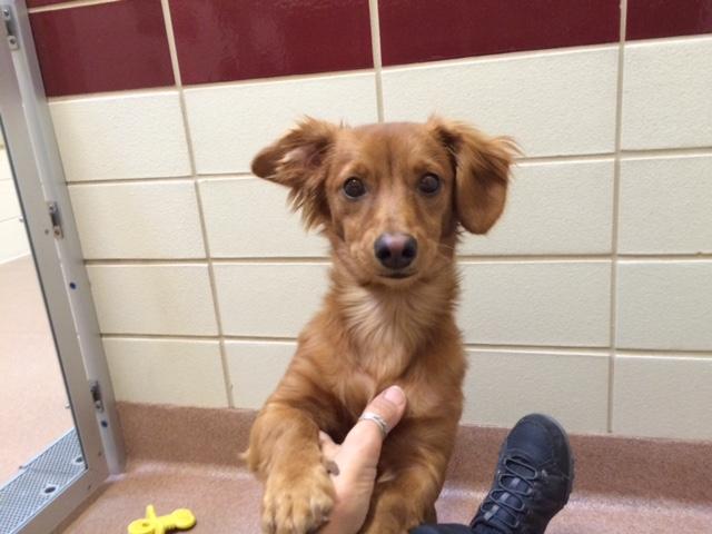 charlie puppy 3