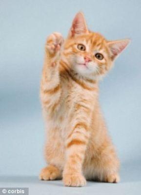 kitten pointing