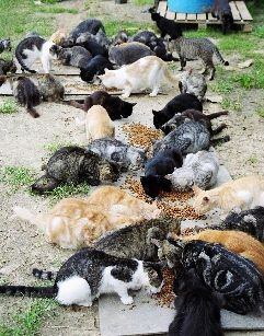 lots of ferals