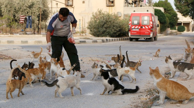 Greece man with cats