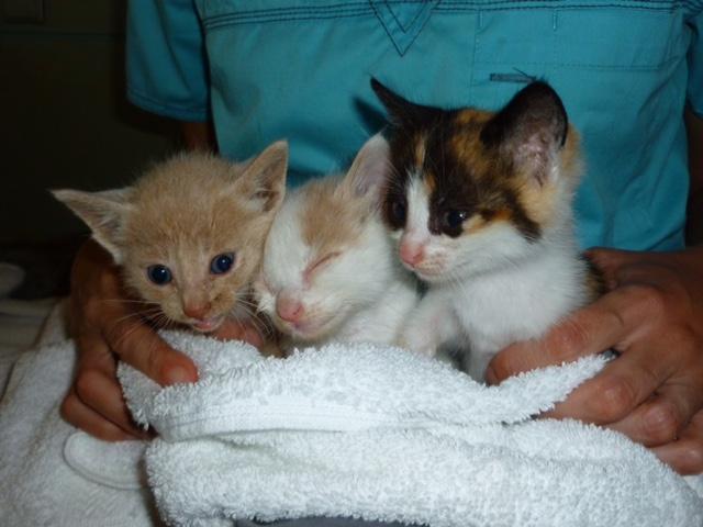 greek kittens after