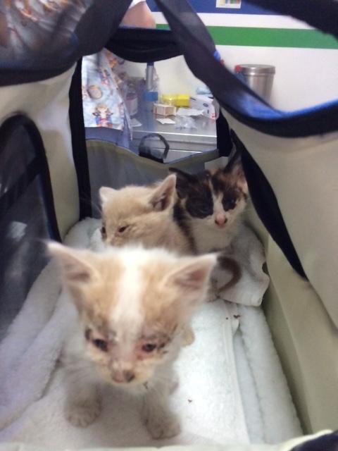 greek kittens before