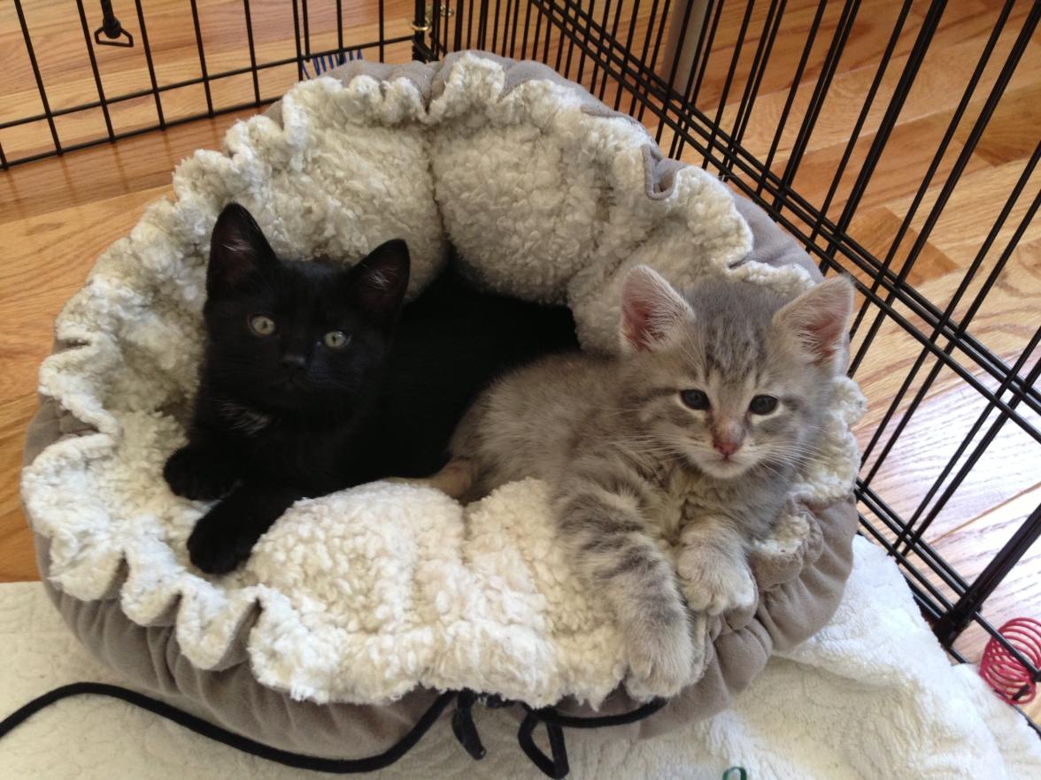 2 feral kittens