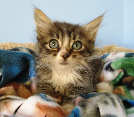 Kern kitten 2