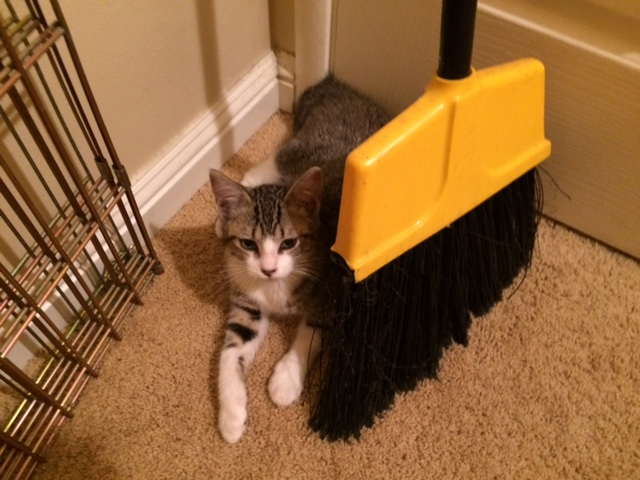 kitten and broom