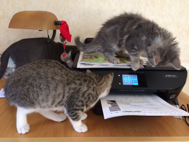 kittens with printer2