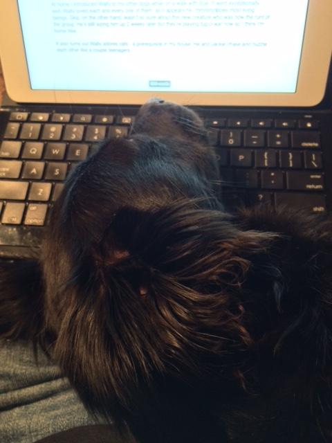 wally on keyboard 5