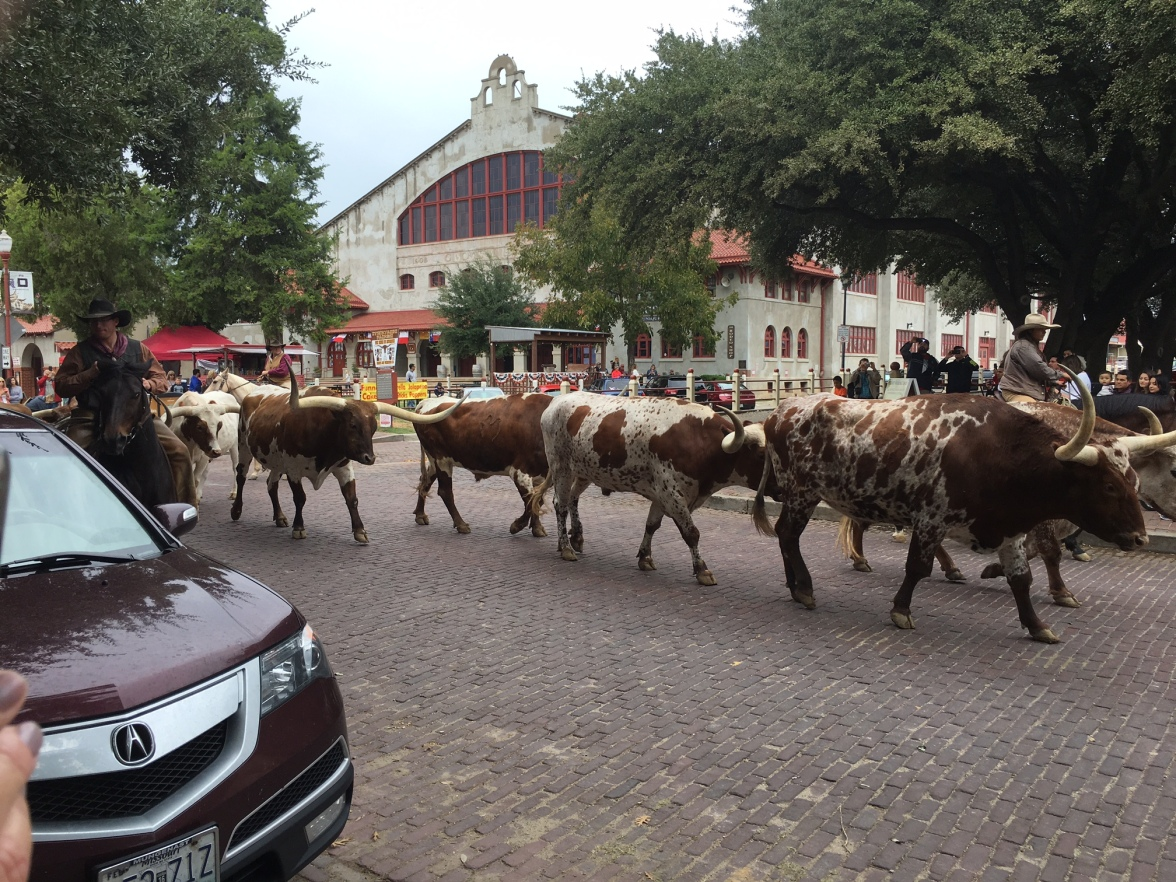 ft-worth-cattle-drive-2