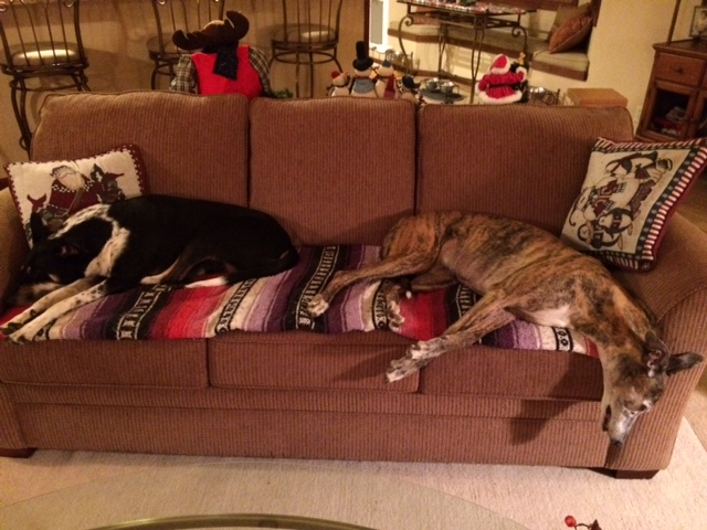 nellie-and-callie-on-sofa