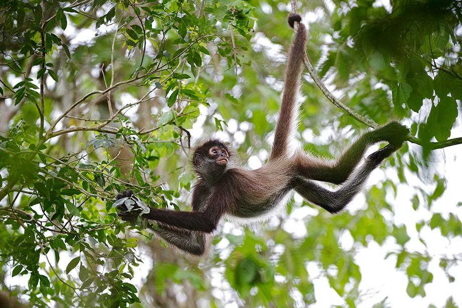 monkey-in-tree