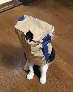 cat hiding in bag