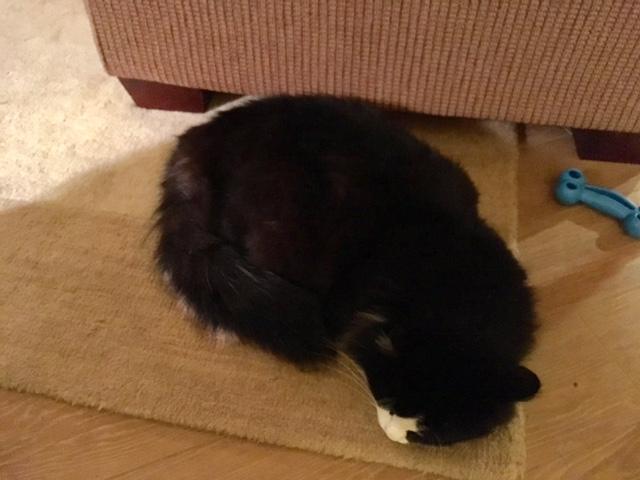 oliver-sleeping