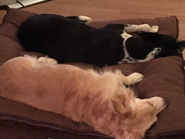 skip-and-callie-sleeping