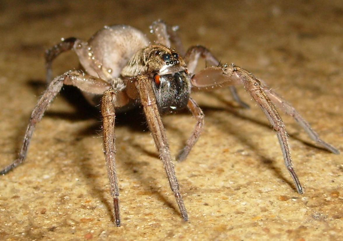 spider again