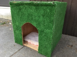 feral house with carpet