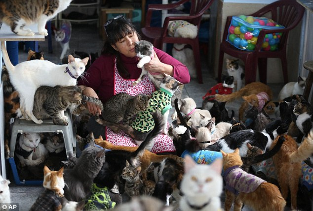 hermit cat lady