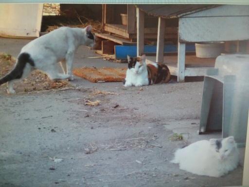 Loretta's cats 2