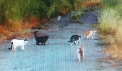Loretta's cats