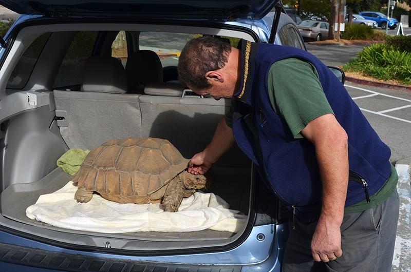 marin humane turtle