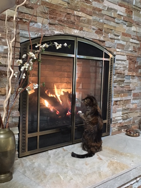 tippi and fireplace