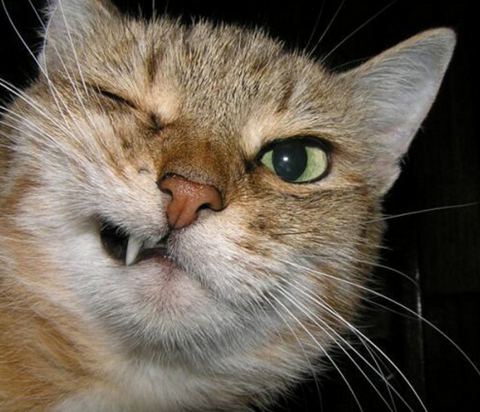 cat making face