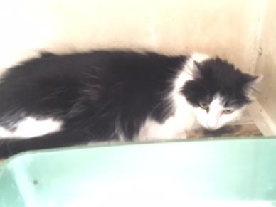 rescued cat 1