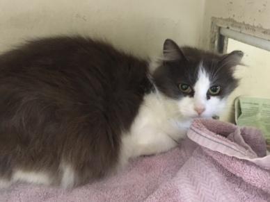 rescued cat 2
