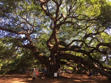 Savannah angel tree