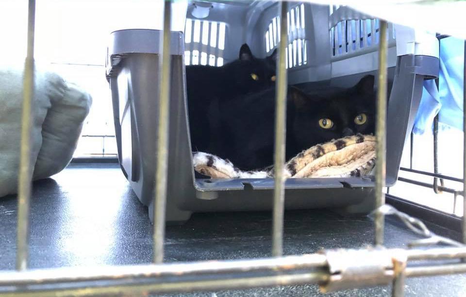 Kyle's black cats