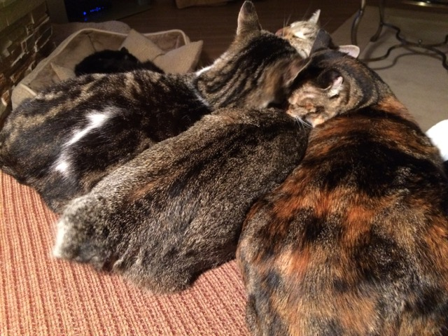 Jack, Savannah and Tippi