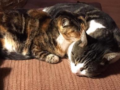 tippi sleeping with jack