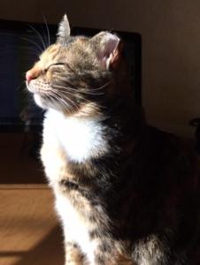 tippi taking in the sun
